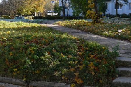 Ферма, сметают листья