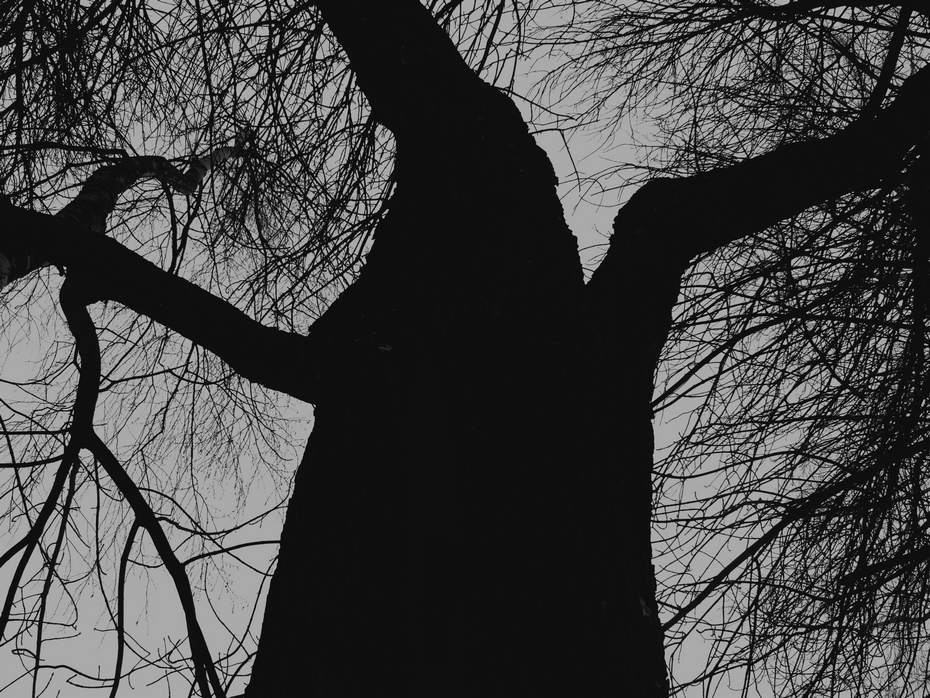 дерево, скрип