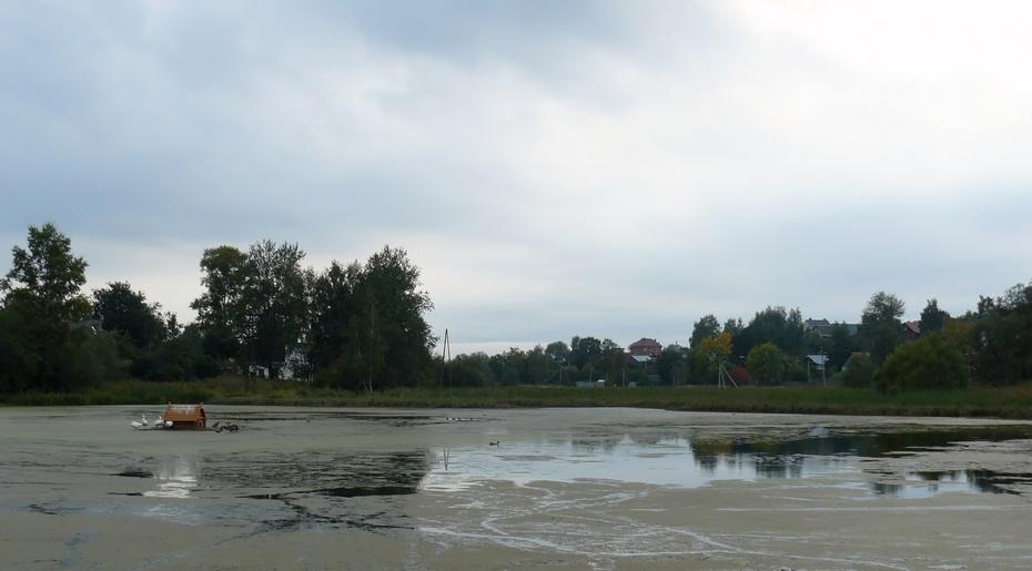 банный пруд, гуси, сергиев