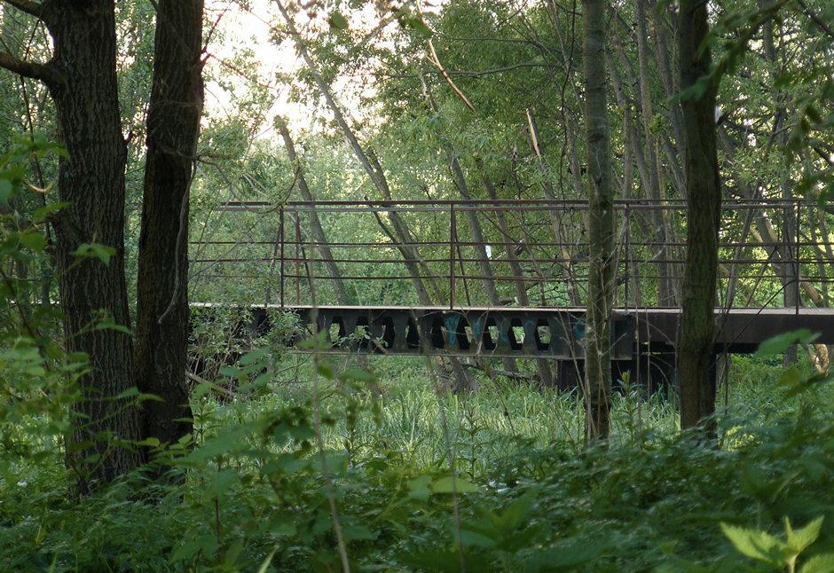 Zvyozdotchka pine woods