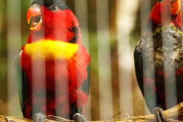 Parrot in a window cage
