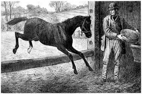 horses sergiev posad