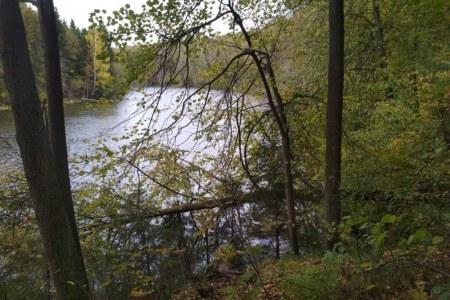 Новая карта: Лесное озеро