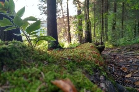 Chernigovsky forest in Sergiyev Posad